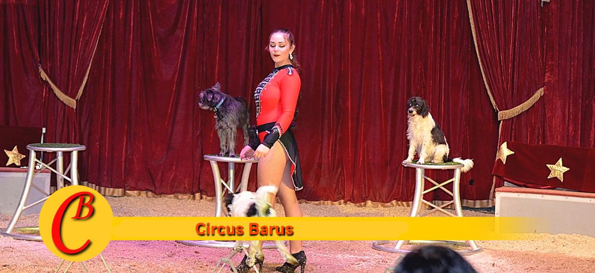 Circus Frank